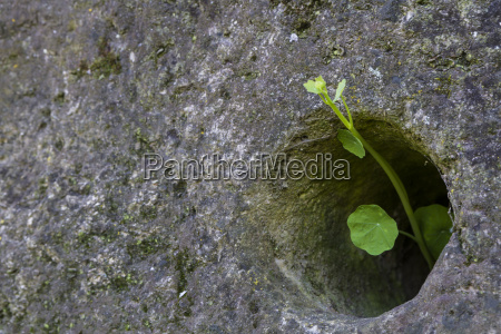 piccola pianta verde che cresce attraverso