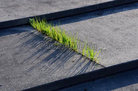 erba e cemento
