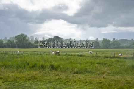 agricoltura nuvola campo conservazione della natura