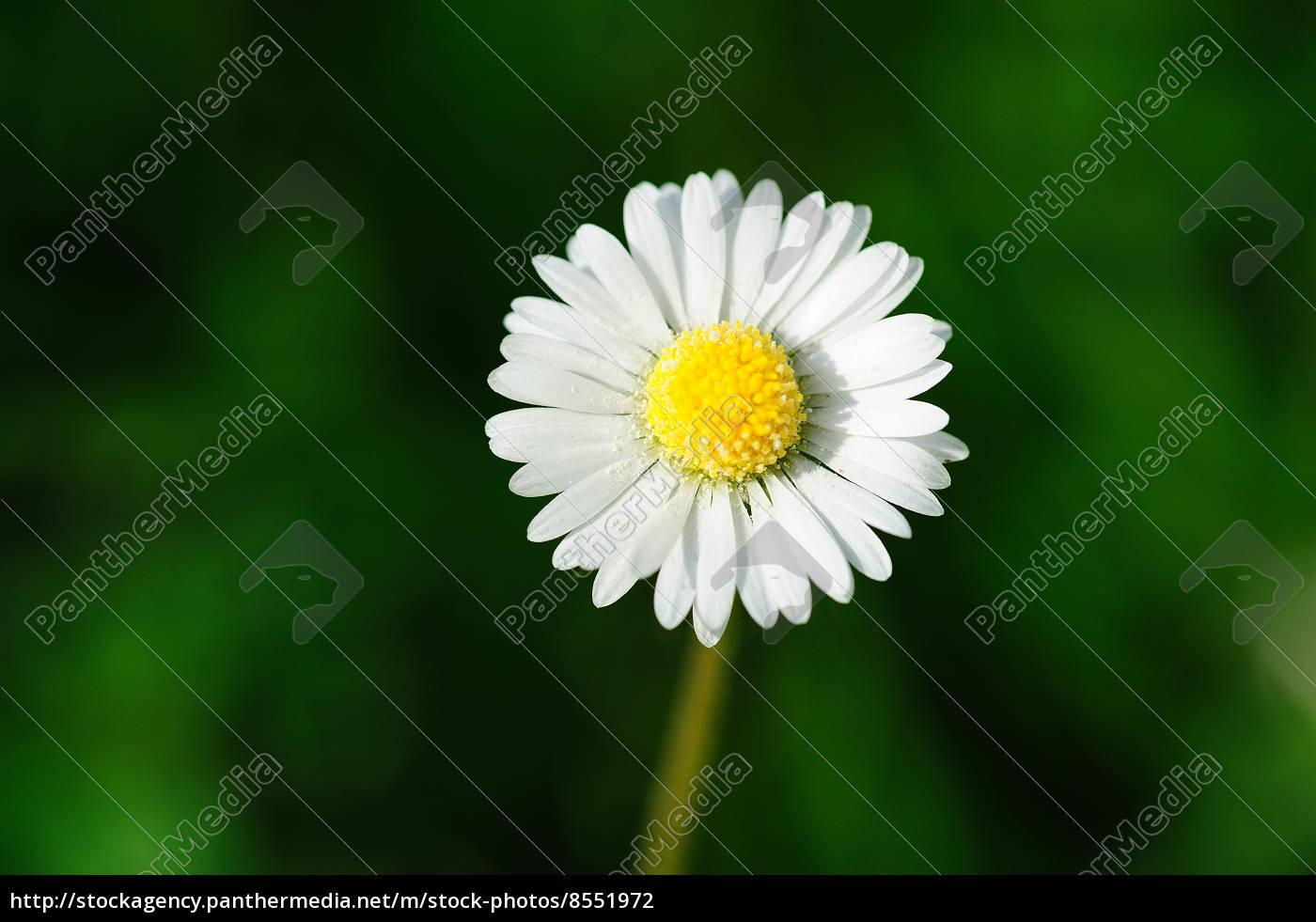 fiori, di, burro - 8551972