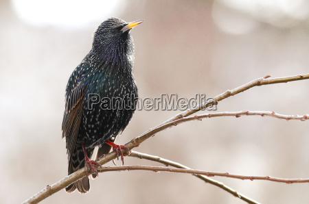 ambiente animale uccello animali uccelli stella