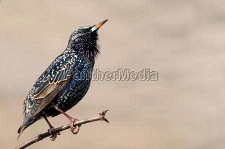 ambiente uccello animali uccelli stella natura