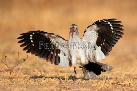 uccello ala penne piume becco beccare