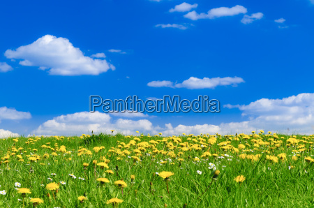 fiore fiori primavera prato cielo firmamento