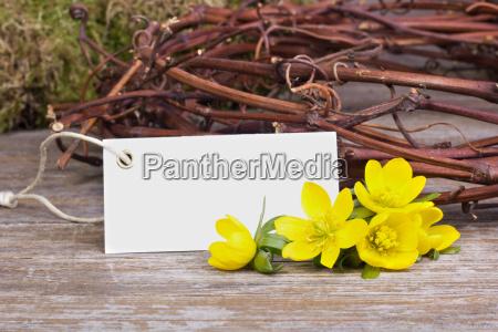 fiore fiori primavera festa della mamma