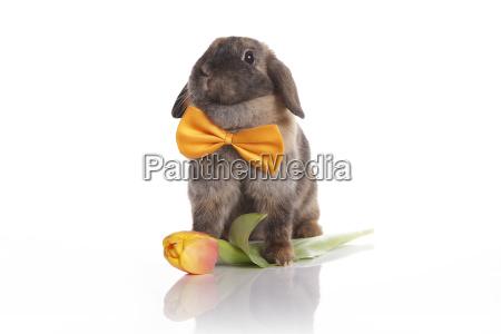 animale domestico mammifero fiore pasqua lepre
