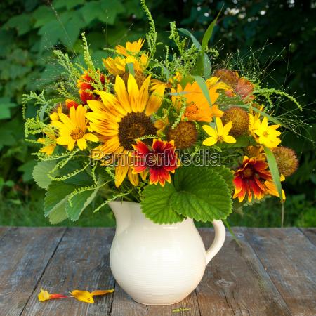 fioritura fiore fiori estate girasoli brocca
