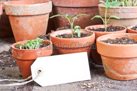 giardino piantare seminare verde legno marrone