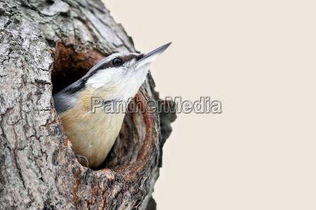 ambiente uccello animali uccelli uccello canoro