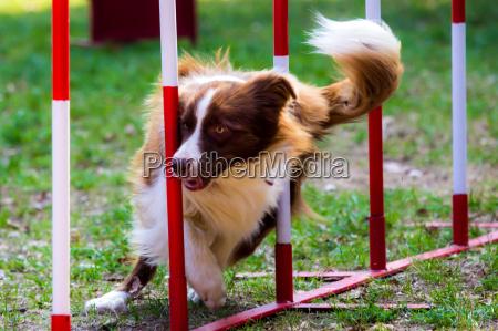 sport dello sport animale animale domestico