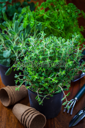 erbe diverse per piantare