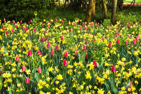 tulipani giacinti primavera giunchiglie stagionale narciso
