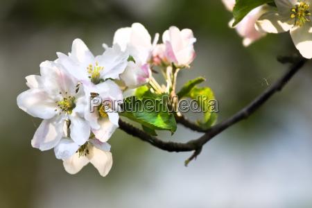 fiore primavera luce del sole bianco
