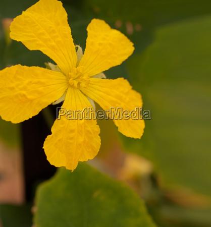 primo piano fiore verdura petalo cavolo