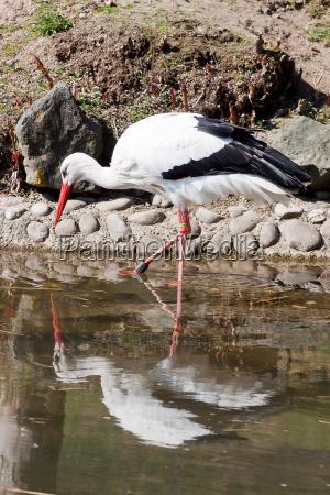 watender stork