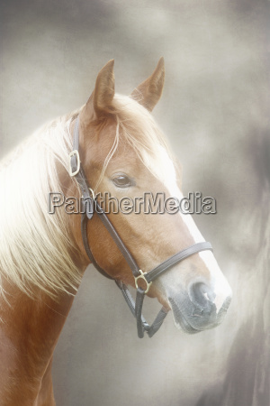 ambiente cavallo animale animali ritratto cavalli