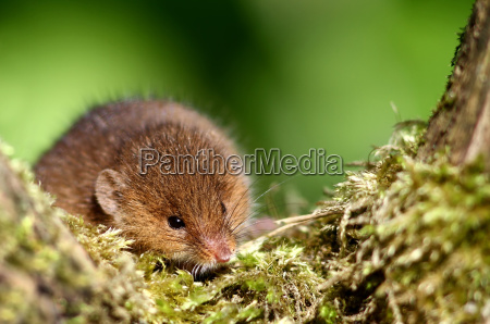 animale animali muschio topo topi topo