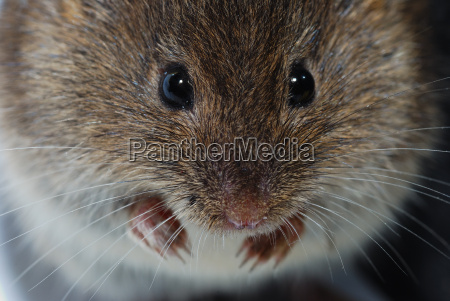 del mouse faccia