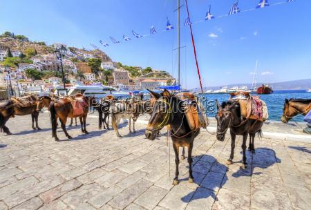 asini sullisola greca