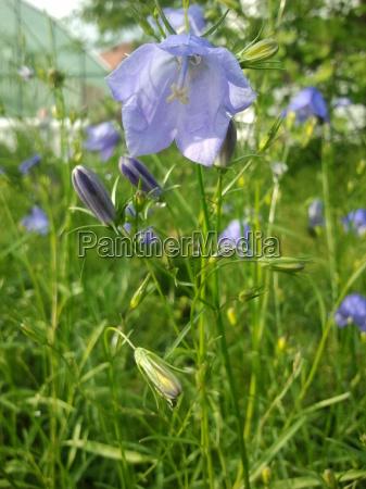 fiore, verde, fioritura, fiori, porpora, gemma - 9425048