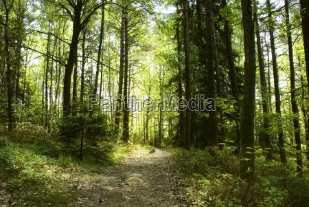 albero alberi legno selvaggio luce soleggiato