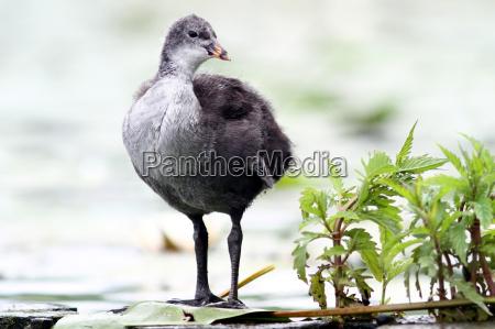uccello uccelli anatre anatra natura