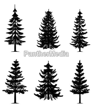 gli alberi di pino raccolta eps