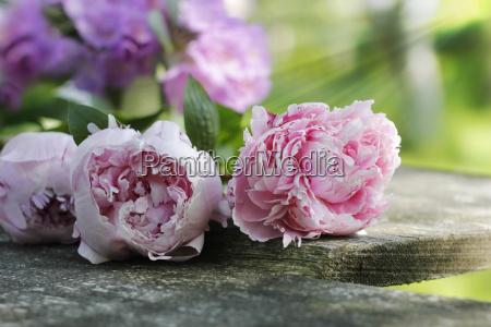 garden flowers on wooden table