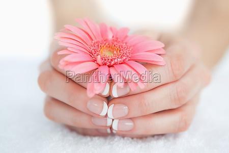 francese mani curate tenendo fiore