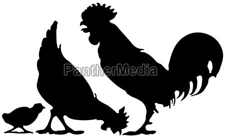 opzionale silhouette fattoria pulcino pollo polli