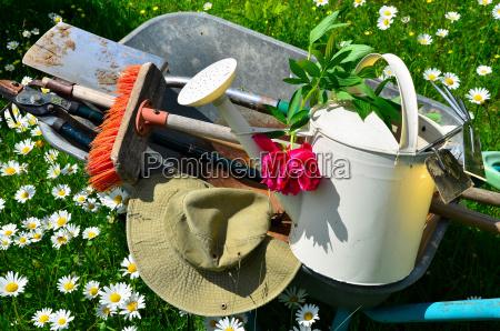 strumento da giardino fiore prato