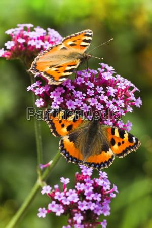 giardino insetti fiore fiori estate farfalla