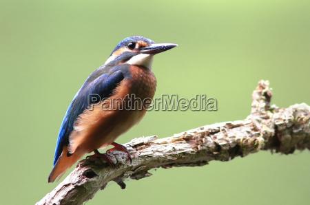 ambiente animale uccello animali uccelli natura