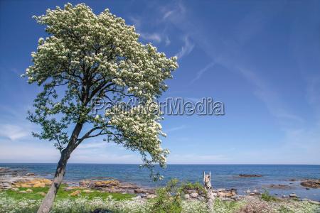 spring seam on the coast of