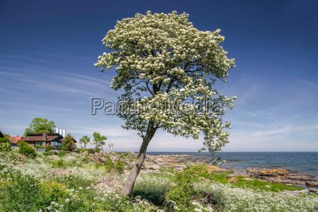 spring bhem on the coast of