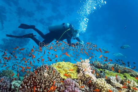 pesce sottacqua natura scogliera sommozzatore