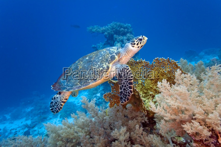 animale selvaggio pesce sottacqua natura tartaruga