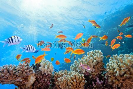 pesce riflesso sottacqua immagine riflessa natura