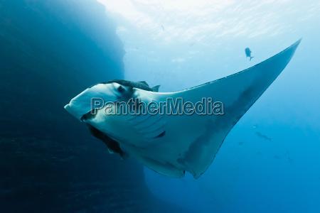 animale pesce sottacqua raggio di luce