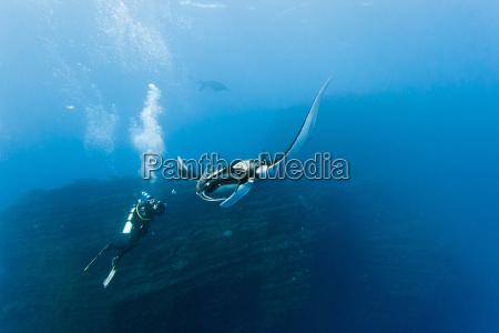 pesce raggio di luce raggio sommozzatore