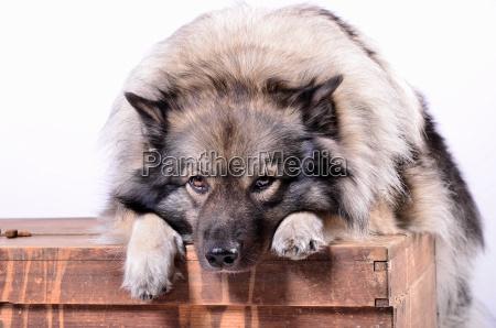 vacanza vacanze animale animale domestico legno
