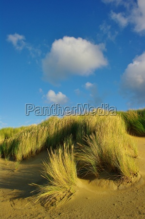 dunes on the beach in ouddorp