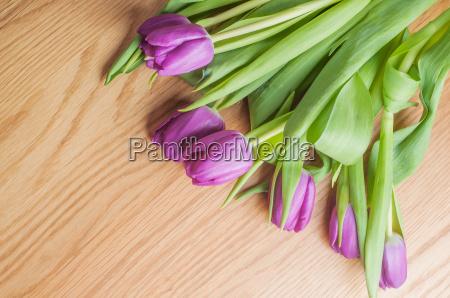 tulipani viola sul legno