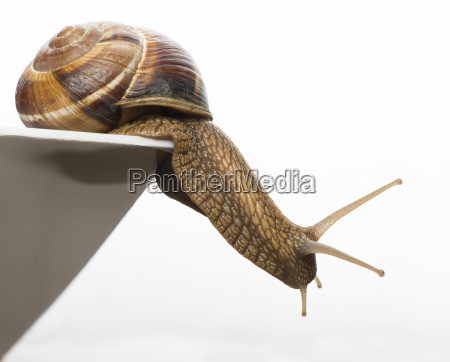 white isolated snail