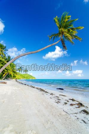 spiaggia, deserta, e, palme - 10091556
