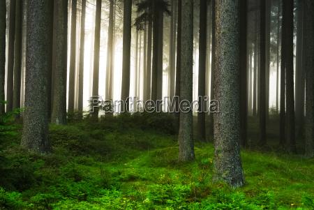 arte verde tronco nebbia linee corteccia