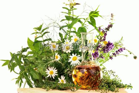 erbe e piante medicinali lomeopatia