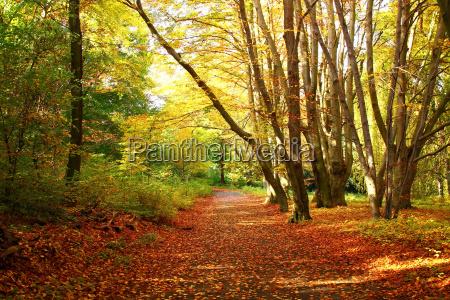 autunno a berlino