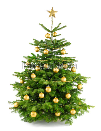 poet gold decorated christmas tree