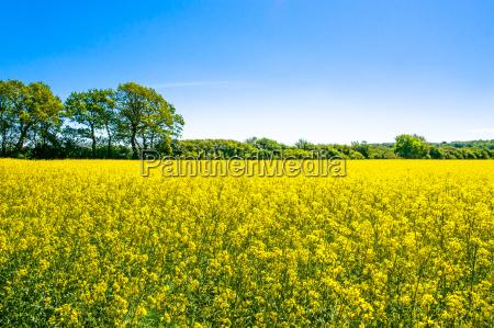 blu bello bella agricolo ambiente albero
